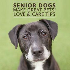Senior Dogs Make Great Pets! Take these love and care tips for your new furry friend.
