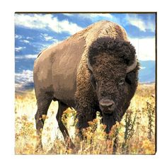Free-roaming bison are at risk of being unnecessarily slaughtered for migrating outside the borders of Yellowstone National Park. Urge government officials to extend bison territory and make it illegal to slaughter them outside of Yellowstone. Le Bison, Bison Meat, American Animals, American Bison, American Indians, Canadian Animals, Yellowstone National Park, National Parks, National Animal
