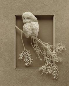calvin nicholls paper sculpture & design  Boreal Owl