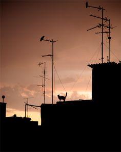 a cat on a rooftop - Tel Aviv, Tel Aviv