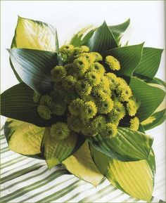 gorgeous green wedding bouquet with button mums & tropical leaves Styles, and Reception, Planning, Weddings, Tropical Wedding Bouquets, Wedding Flowers, Wedding Dresses, Florist Supplies, Tropical Leaves, Merry And Bright, Green Wedding, Flower Decorations, Wedding Inspiration