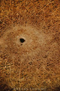 Animal trails to waterhole (aerial), Chobe National Park, Botswana