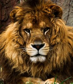 Photograph King by taisuke kato on 500px