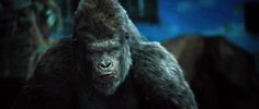 Archives Of The Apes: Dawn Of The Planet Of The Apes (2014) Part 28