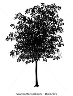 Google Image Result for http://image.shutterstock.com/display_pic_with_logo/6833/6833,1219921889,1/stock-photo-detailed-illustration-of-a-young-maple-tree-silhouette-16639990.jpg