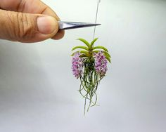 Rynchostylis gigantea orchid Handmade - cold porcelain- 1:12 scale.