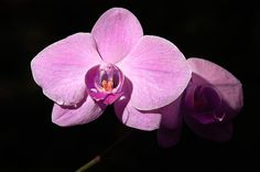 Bright Orchid-Penny Lisowski Just click on image and click again for more info,