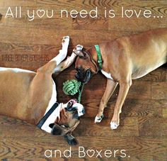 All you need is love and boxers. Boxer puppy