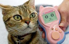 """""""Meowlingual"""" c'est quoi ?  en provenance du Japon, c'est le premier traducteur de langue des chats. Il décrypte 200 miaulements, 6 humeurs et 21 émotions félines différentes. Il coûte tout de même 140€ ^-^"""