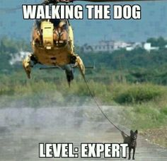 Extreme dog walking - This weeks funniest pictures - Pictures - Weird . Animals And Pets, Funny Animals, Cute Animals, Animal Fun, Funny Animal Pictures, Dog Pictures, Funniest Pictures, Animal Pics, Funny Dogs