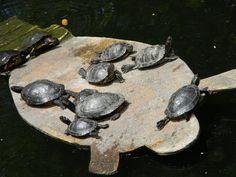Best of Long Beach | Meandering through El Dorado Nature Center