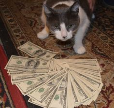cat be like county stacks