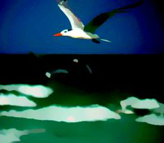 A tern pretending to fly over the arctic ocean