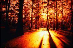 Louisiana sunset atchafalaya swamp