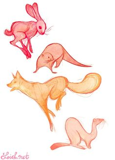 hare, otter, fox and weasel!