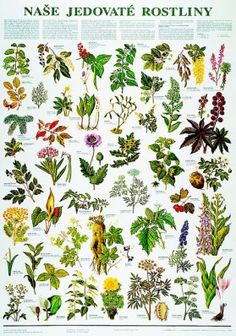 Nature Study, Permaculture, Botanical Illustration, Amazing Nature, Botany, Projects For Kids, Kids Learning, Flower Power, Flower Arrangements