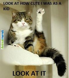 16977ba3380286acd9d05b658c7e1518 leg lifts pin up models cat memes i'm an artist cat memes pinterest cats, cat