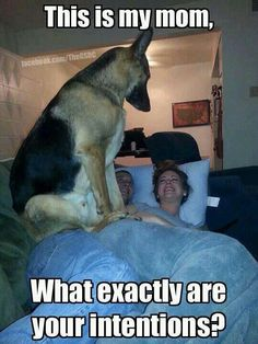 I fell the same way my fellow dog friend