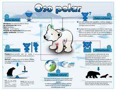 El Oso Polar http://2.bp.blogspot.com/-h09E0wO_Byc/UPMfVY25qYI/AAAAAAAADcM/6M4_TwtLShg/s1600/infografia_Oso-polar.jpg