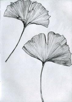 ginkgo tatoo