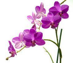 Bildergebnis für Orchideen