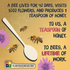 Bees play a vital role in the workings of our ecosystem! 🐝 A worker bee lives 40 days, and makes a fraction of a teaspoon of honey, each… Worker Bee, Vegan Facts, Save Our Earth, Vegan Quotes, Bee Friendly, Save The Bees, Bee Happy, Busy Bee, Bees Knees