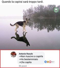 Rebus divini. #commentimemorabili Maybe Meme, Bad Humor, Serious Quotes, Strange Photos, Super Funny, Funny Photos, Fun Facts, Harry Potter, Funny Memes