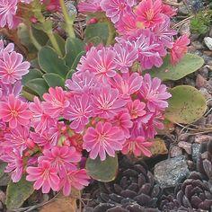 Short Plants, Tall Plants, Plant Labels, Peat Moss, Clay Soil, Drought Tolerant Plants, Different Plants, Plant Needs, Growing Vegetables