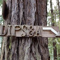 The 101st Dipsea, and its Sob Stories