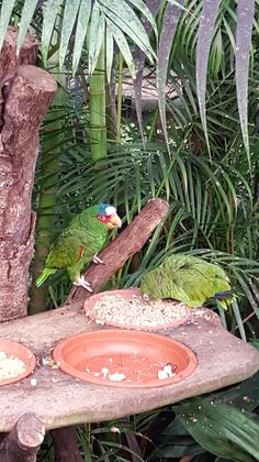 Tropenhaus Vogelpark Marlow