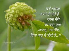 Shayari In Hindi, Hindi Quotes, Golden Leaves, Deep Thoughts, It Hurts, Herbs, Plants, Herb, Plant