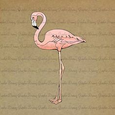 INSTANT DOWNLOAD  No.KM1113  Pink Flamingo  by GraphicDreamz, £2.04