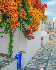 #bougainvillea. Sifnos Greece - shekhar varma - Google+