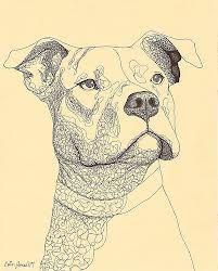 pit bull drawing - חיפוש ב-Google