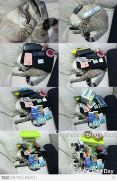 Laaaaaazy cat!