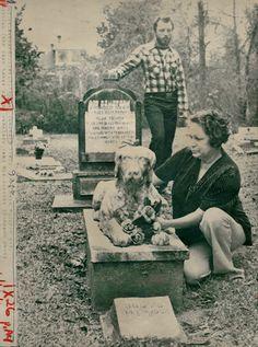 Abandoned pet cemetery has eerie, murderous past   NOLA.com