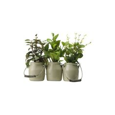 Herbs in Ceramic Pots Set of 3 ($23) ❤ liked on Polyvore featuring plants, fillers, decor, flowers and herbs