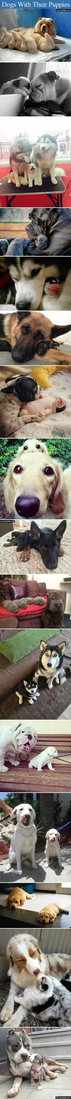 Dogs With Their Puppies cute animals cat cats adorable animal kittens pets kitten funny pictures funny animals funny cats | Visit http://gwyl.io/  for more diy/kids/pets videos