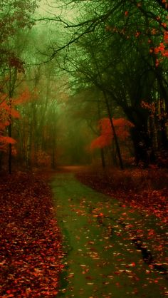 """A Walk in Autumn - """"Nature photography"""" – Rare Selection Gallery, Part IV 