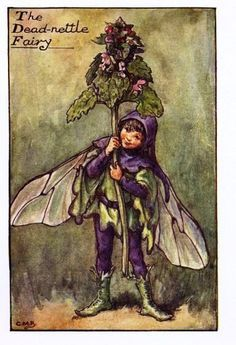 The DEAD-NETTLE Fairy ~ Cicely Mary Barker ~