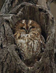 Cute owl hiding out:)