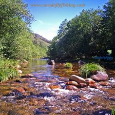 If you come to Portugal or consider visiting us it is reasonable to think about wild brown trout and fly fishing. We can show you river stretches easily accessible or rivers away from roads or houses where is difficult to find other angler. Trout Fishing, Fly Fishing, Most Beautiful, Beautiful Places, Brown Trout, Places In Europe, Portuguese, Cave, Rio