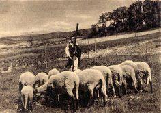 #Detva #Podpoľanie #Slovensko #Словакия #Slovakia Folk Art, Westerns, Cow, Embroidery, Retro, Painting, Animals, Inspiration, Europe