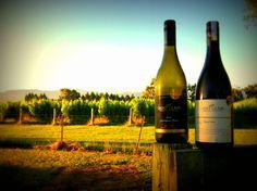Saint Clair, Marlborough, New Zealand. Best Sauvignon Blanc ever tasted.