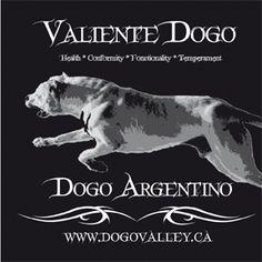 Valiente dogo design Movies, Movie Posters, Design, Films, Film Poster, Popcorn Posters, Cinema, Film Books, Film Posters