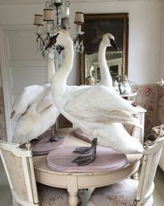 The swanlake..... #taxidermy #forsale#antiquedealersofinstagram #antiques #brocantebydejavu #swan. ***we can't ship the swans! ***