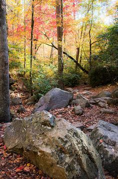 """""""A Palette of Colors""""  by Parker Cunningham Note by Parker Cunningham:  """"Beautiful fall colors burst forth at Peavine Falls in Oak Mountain State Park,  Alabama"""""""