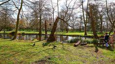 The Woodlands Garden