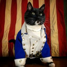 Proof Cats Are Cool Even in Costumes Crazy Costumes, Pet Costumes, Hamilton Cosplay, Show Me Cats, Cat Cosplay, Cool Cats, Cat Lovers, Kitty, Cute