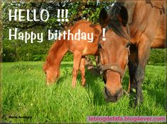 Free Birthday e-card + e-gift funny horse staring at you ! Happy Birthday Horse, Happy Birthday Wishes, Funny Birthday, Birthday Quotes, Birthday Cards, Horse Quotes, Horse Sayings, Staring At You, Horse Pictures
